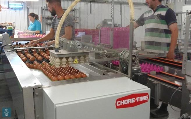 走地雞蛋場的入蛋機