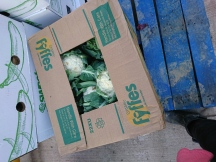 捐出的椰菜花