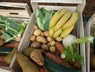 香蕉還是很新鮮,還有因為太小而被捐出的薯仔。啤梨和香蕉用作造沙律